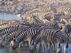 Etosha National Park Travel Leads