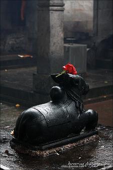 Nandi At Mookambika Devi Temple