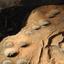 Nanguluwur Stone Carvings