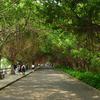 NanSha Wetland Park