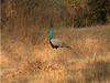 Narsinghgarh Wildlife Sanctuary