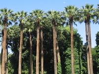 Jardín Nacional de Atenas