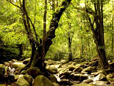 National Parks - Gunung Gading National Park