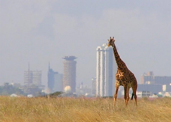 Tour of Nairobi National Park And City Excurssion Photos