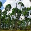 Phong Nha - Ke Bang Parque Nacional