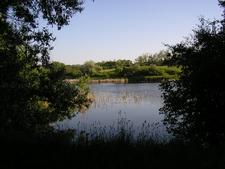 Nature Conservation Area Of Töreki, Siófok
