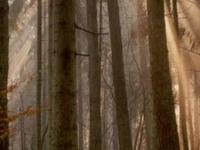 Las reservas naturales de Czarna Białostocka Comuna