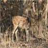 Nauradehi Wildlife Sanctuary