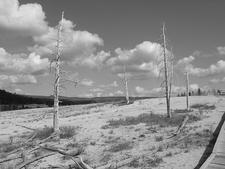 Near A-0 Geyser - Yellowstone - USA