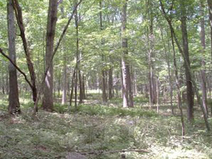 Forestal del Estado Nehantic