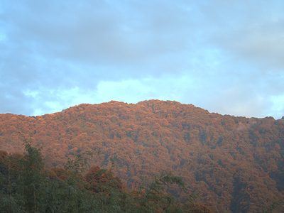 Neora Valley NP Landscape