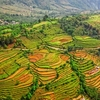 Nepal Rice Field Terraces