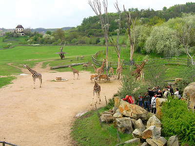 New Giraffe Exposition