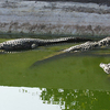 Neyyar Wildlife Sanctuary