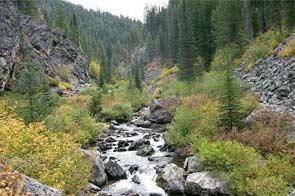 Nez Perce National Forest