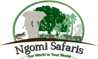 Ngomi Safaris