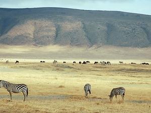 Heart of Kenya and Tanzania 9 Days Fotos