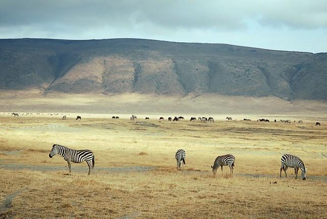 Heart of Kenya and Tanzania 9 Days Photos