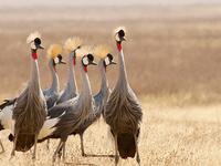 6 Days Ngorongoro Highlands Walking Tour