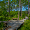 Nice Wander Trail
