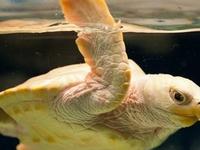 North Carolina Aquarium at Pine Knoll Shores