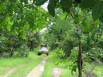 Niokolo-Koba Forest Area