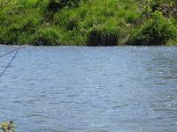 North Branch Kishwaukee Río