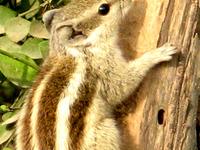 Aravali Biodiversity Park