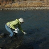 North Fork Gunnison River Colorado
