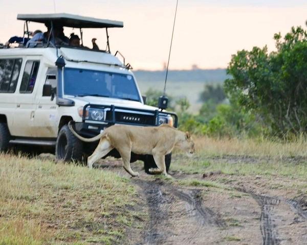 8 Days Safari Through The Famous National Park Photos