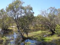Australias Northern Territory - Crocs, Rock Art and Falls 6 Days