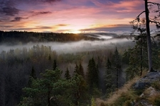 Noux National Park Misty Morning In Finland