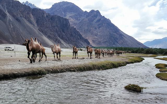Ladakh 6 Nights 7 Days Tour Photos