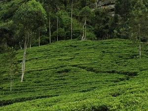 Magical Journey... in Sri Lanka
