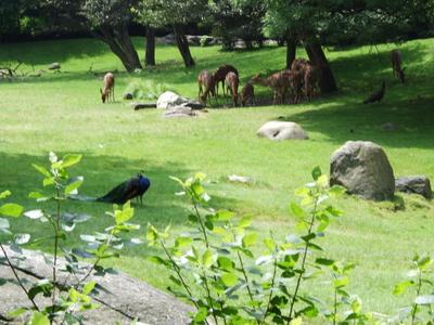 Nyalas Marabou Storks
