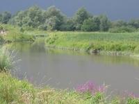El Biesbosch