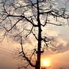 Natural Beauty Of Kalaigaon
