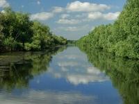 Narrow Channel In The Danube Delta