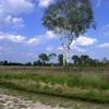Netherlands Grote Peel Birch