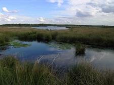 Netherlands Grote Peel Lake