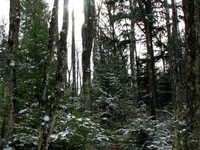 Chequamegon Nicolet National Forest