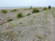 North Saaremaa Coast