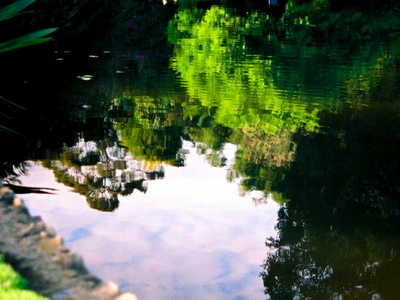 Nympheas  Lake