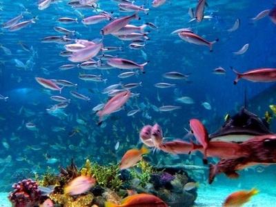 Manila Ocean Park Oceanarium In Manila