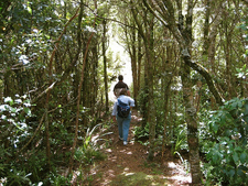 Ogilvies Ridge Loop Track - Te Urewera National Park - New Zealand