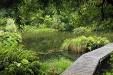 Ohinetonga Track - Tongariro National Park - New Zealand
