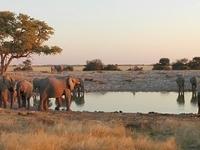 5 Day Private Guided Etosha Safari