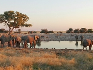 5 Day Private Guided Etosha Safari Fotos