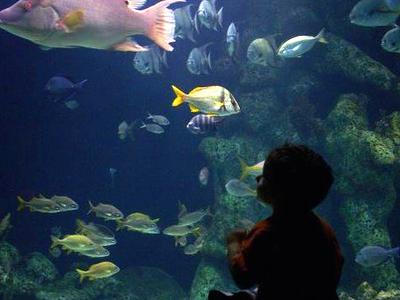 A Fish Tank At The Oklahoma Aquarium