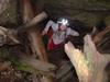 Okupata Caves Track - Tongariro National Park - New Zealand
